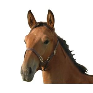 http://www.equisport.fr/36-79-thickbox/licol-foal-chetak.jpg